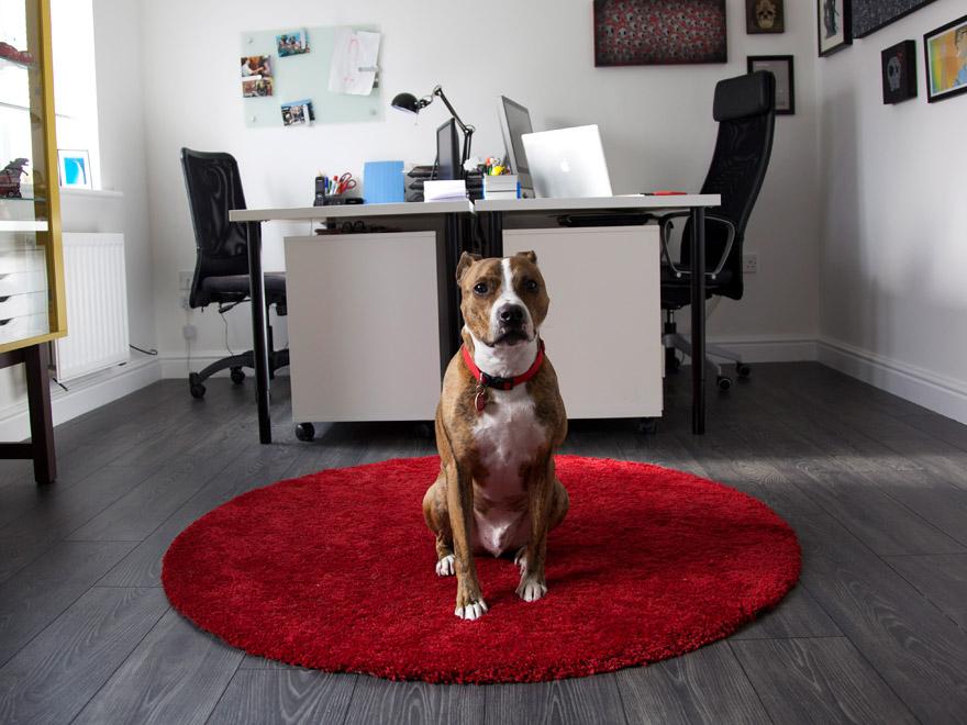 Our guard dog hard at work