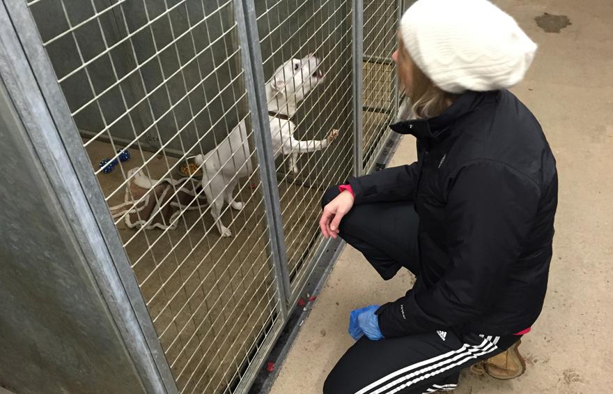 Babbington Rescue Campaign